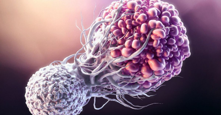 """Scientists Have Discovered Immune Cell That Could Become """"Universal"""" Cancer  Treatment - Aviance Tech News"""