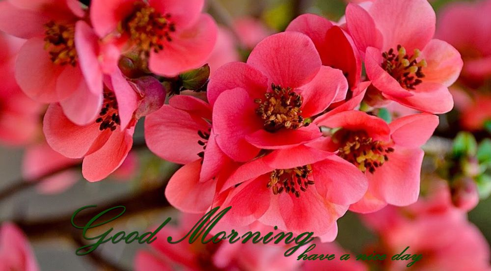 10 Best Good Morning Images Good Morning Whatsapp Images Aviance Tech News
